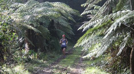 Washpool World Heritage Trails 2021